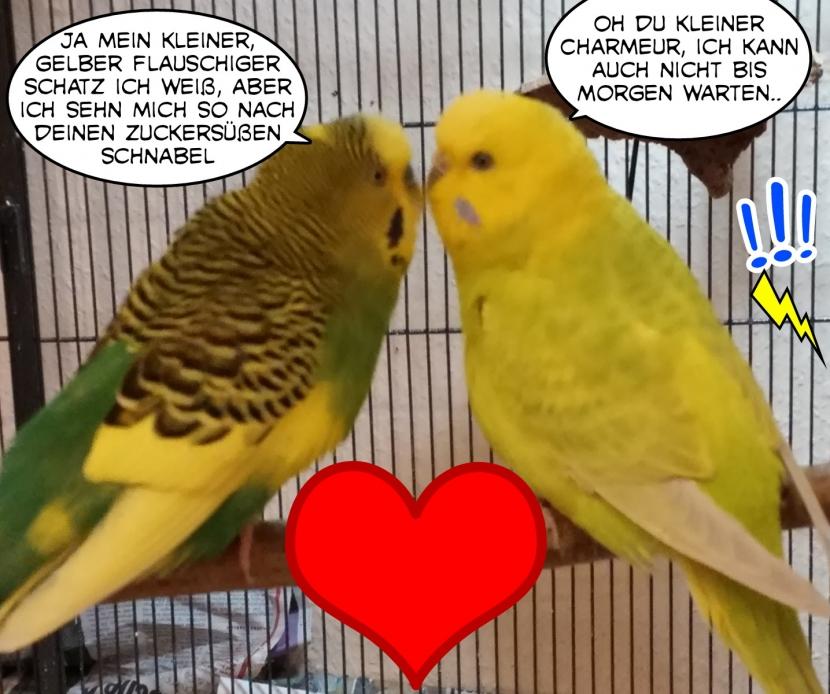 Kuss und Kompliment Otto und Coco