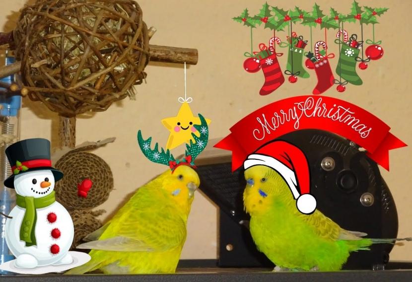 Wellipaar mit Weihnachtsdeko