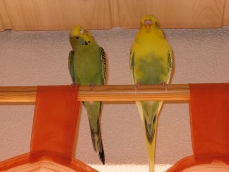 Sammy und Trixi auf Vorhangstange