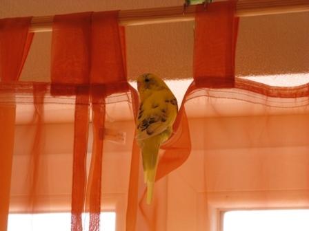 Sammy im Vorhang
