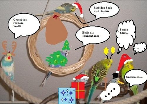 Weihnachtswellensittiche