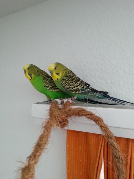 Pippo und Adonis auf Erkundungstour
