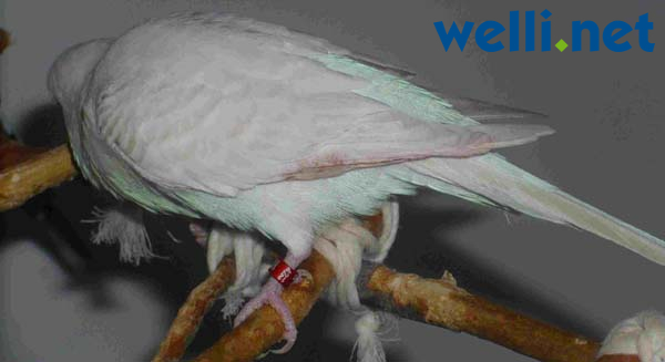 Großer schwarzer Schwanz verletzt Geldbeutel-Bogen-Videos gestohlen