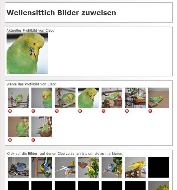 bilder von profil
