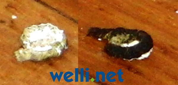 Veränderter Kot Beispiele Wellensittich Portal Wellinet