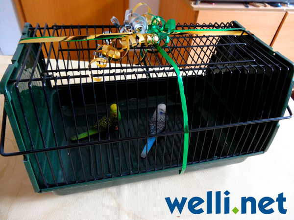 Wellis in Box