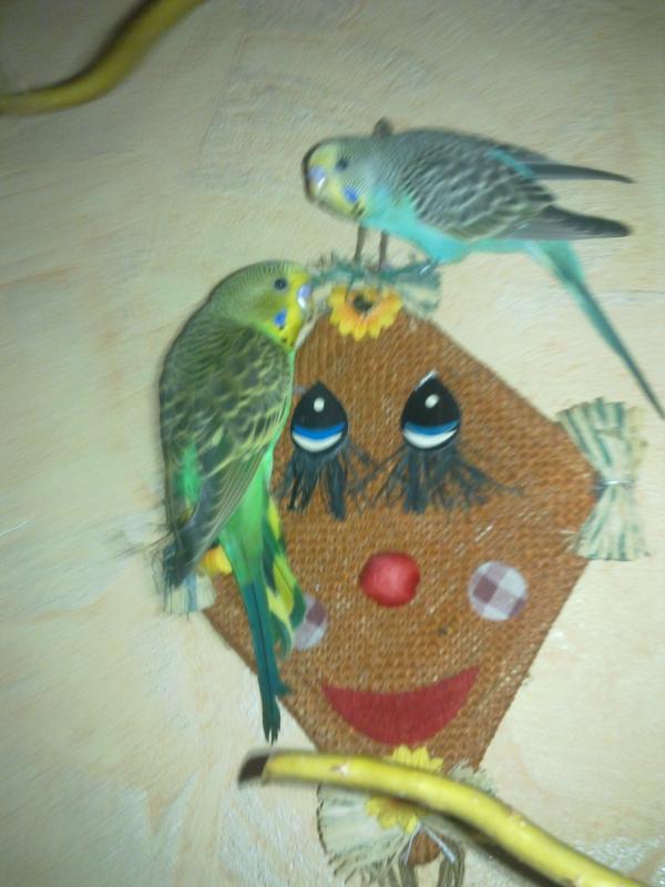 Die Drachenvögel