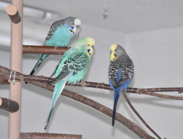 Männergespräche - Benno, Niko und Merry
