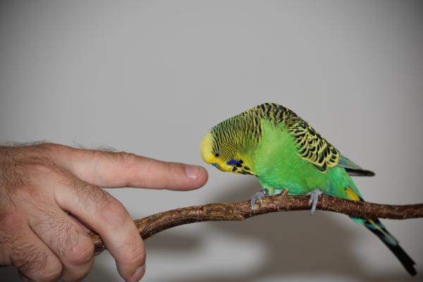 Was isn das? Federlose Finger und Hansi