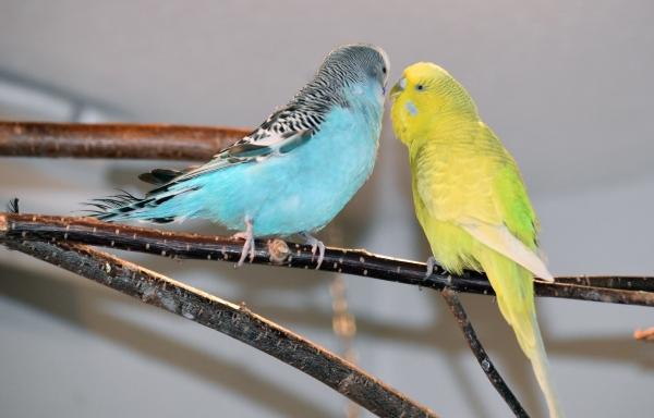 Livy und Tweety