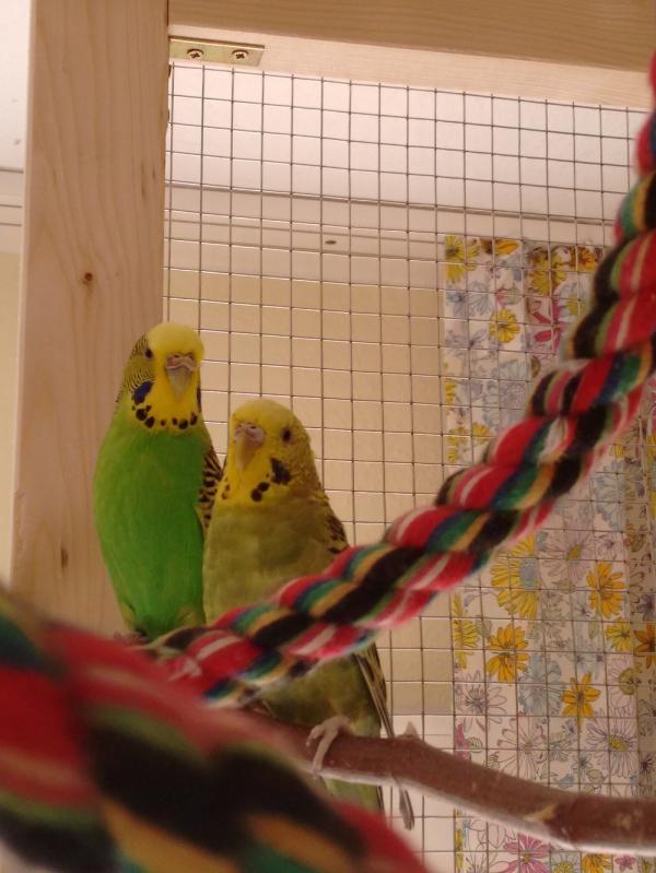 Flocke und Balu