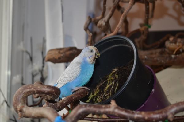 Bluechen (drecksspatz :-) )... unsere Gärtnerin!