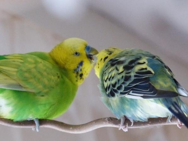 Liebe ist wenn man jeden Happen mit einander teilt