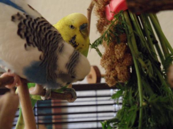 Achim und Juri am Möhrengrün 1