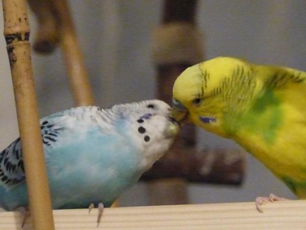 Amy und Miro beim zärtlichkeiten austauschen