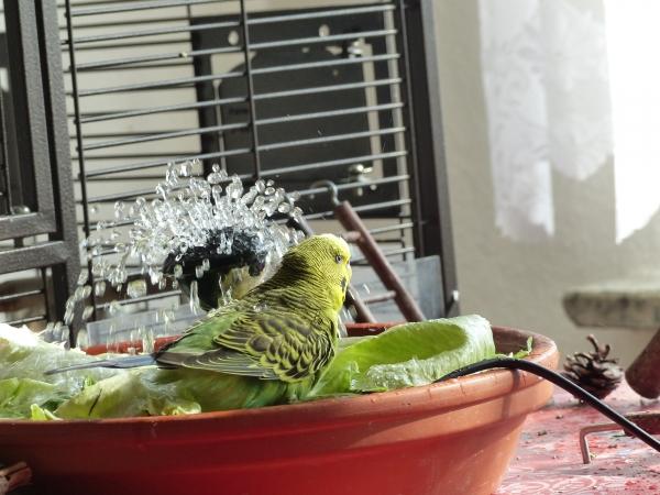 Beim baden erwischt! ;-)