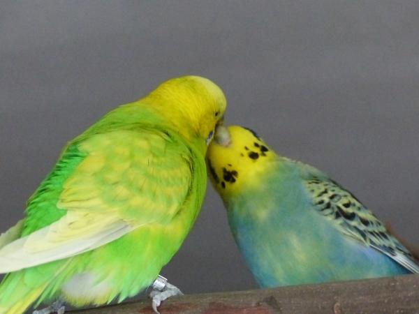 Darum heißt der Spruch auch Liebe geht durch den Magen :-)