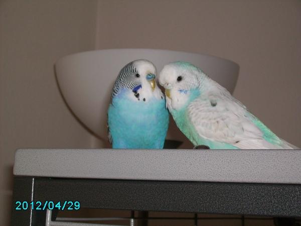 Bazi und Lucy
