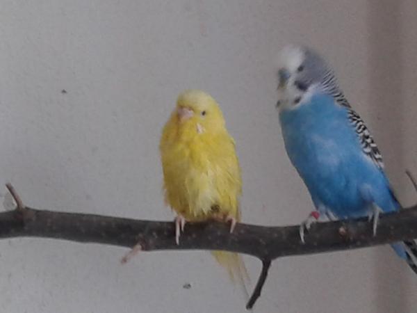 Sunny und Pepi