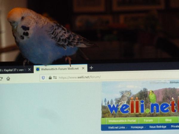 Sally am PC
