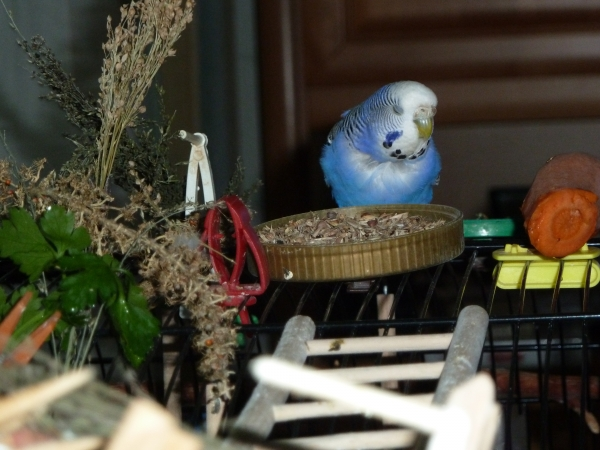 Molly läßt sich Grassamen schmecken