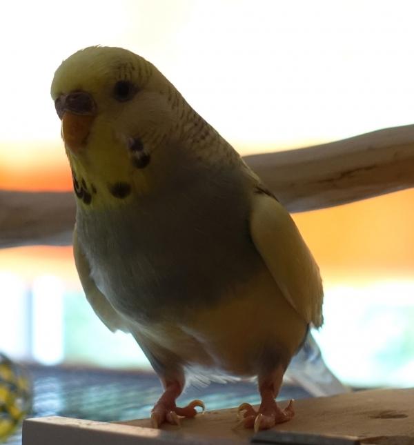 Skye Profilbild