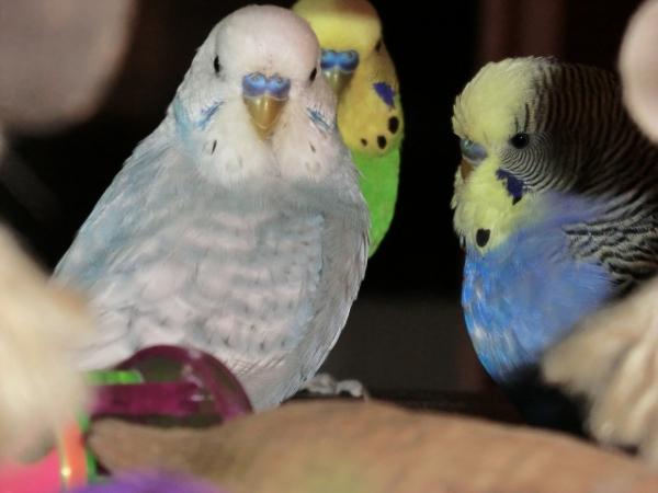 Drei grosse Jungs