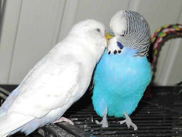 Fred und Stink