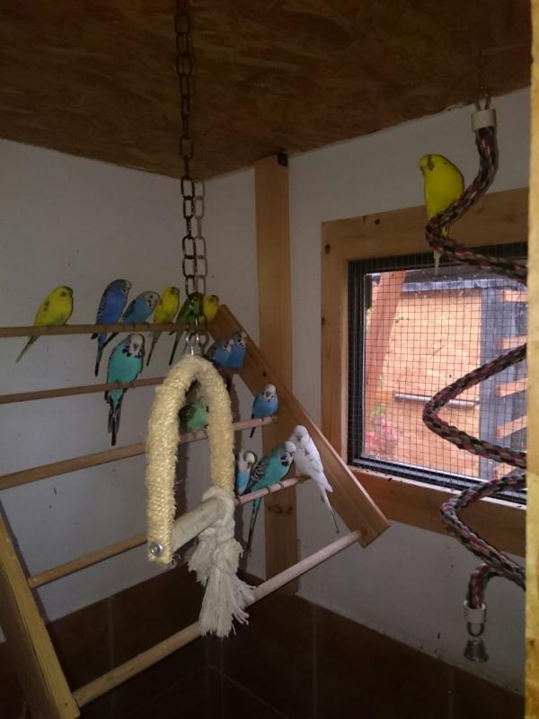 Meine Vögel