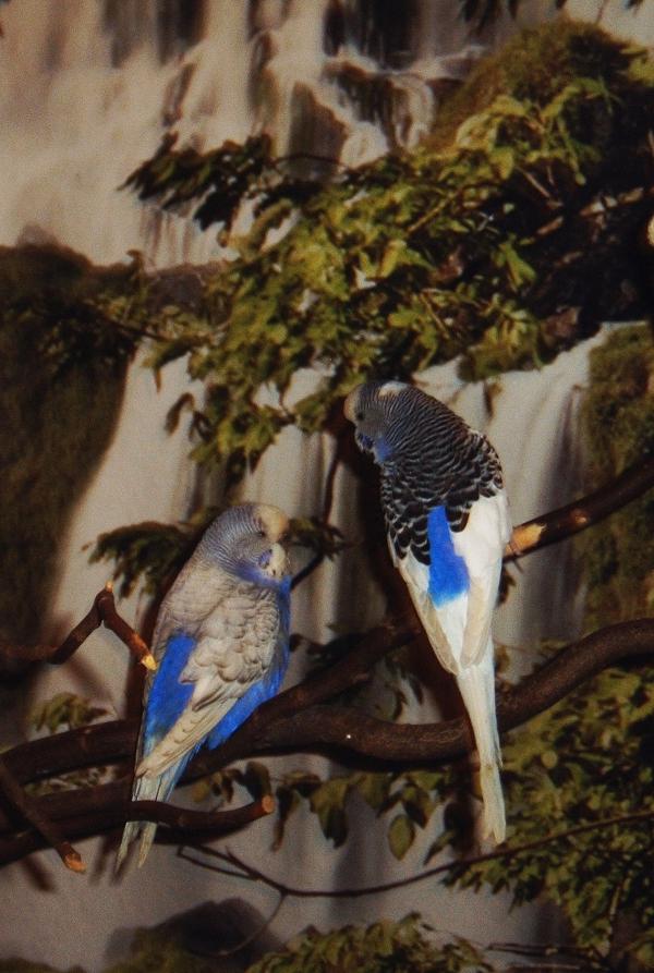 03. Neuer Vogelbaum