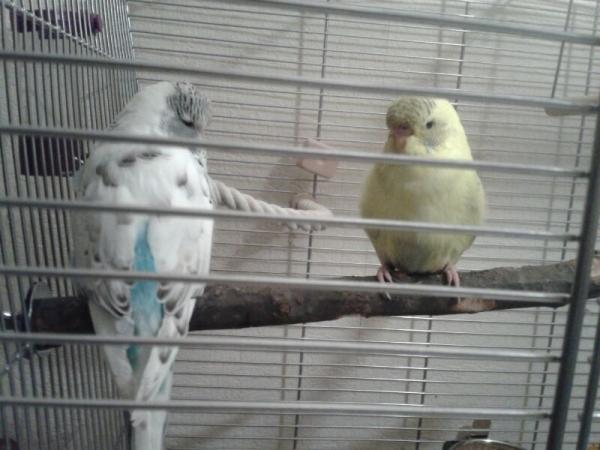 Meine beiden Jungs