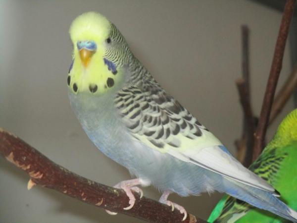 Neues Profilbild von Piro