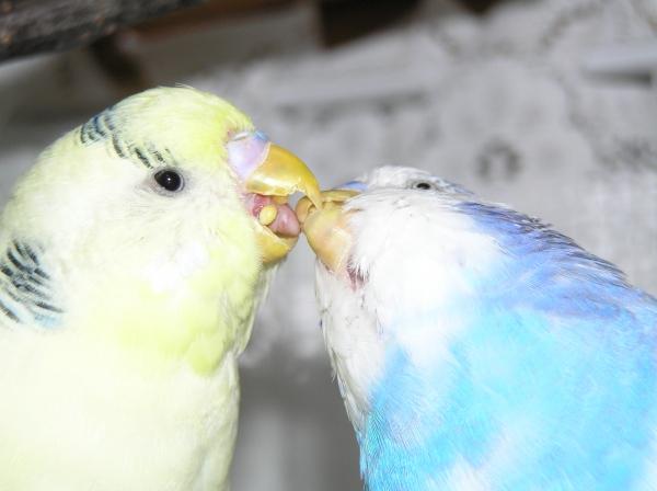 Körnchenübergabe: Fanny und Cindy