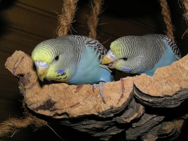 Unsere blauen Zwillinge