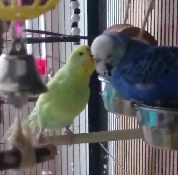 Nicky und Lilly verliebt