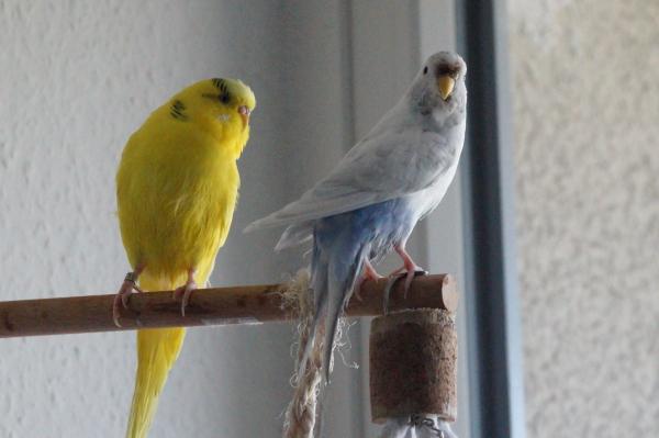 Sunny und Lumi frisch gebadet