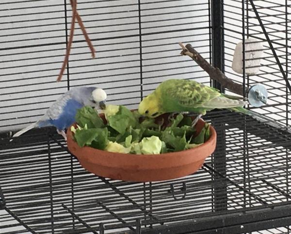 Mmmh - Salat