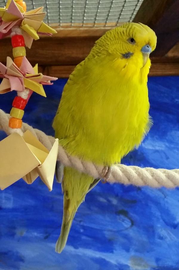 Hilfe Lucky mutiert zum Grünfink!!!