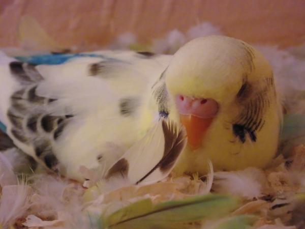 Mein Polly am Schlafen