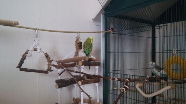 Henry und Hansi beim erkunden