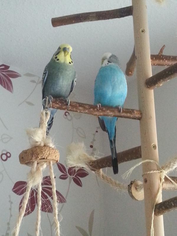 Sid und Ella