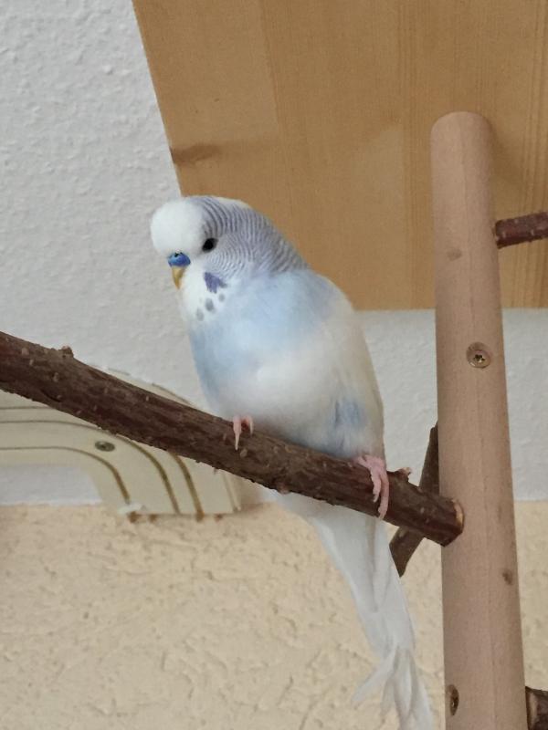 Nino auf dem Vogelbaum