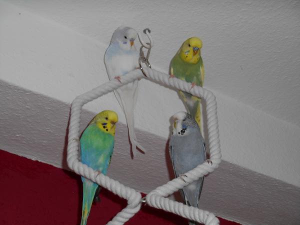Flauschi Quartett