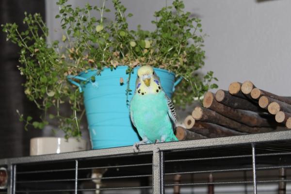 Matilda liebt Vogelmiere