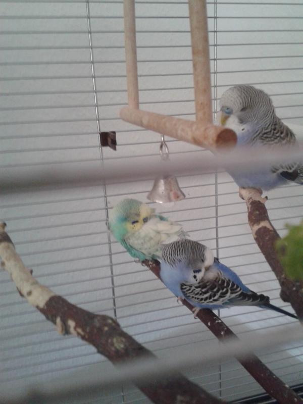 Bubi & Susi & Neuzugang Cookie