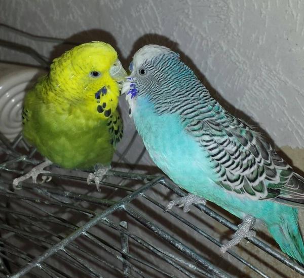 Poldi und Tiffy <3