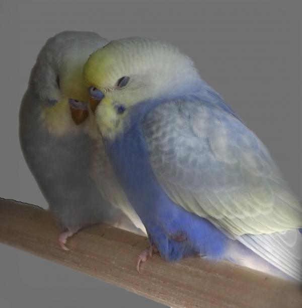 Huey und Charlie