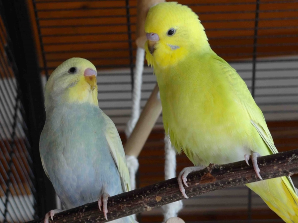 Jungvögel aus 2014