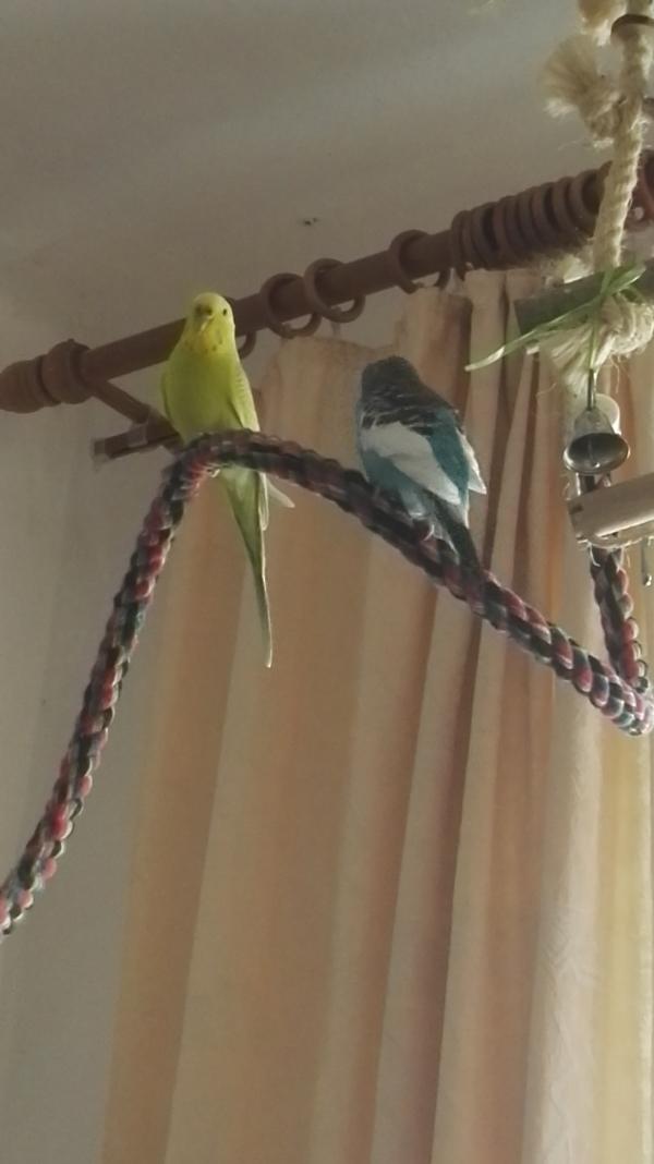 Susi und Flocke ganz privat