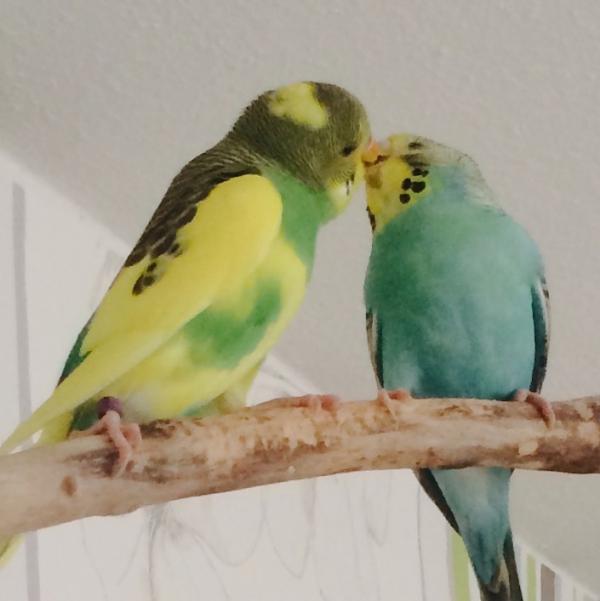 Die ersten Küsse